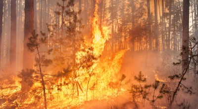 Forest Fire Is Destroying Land, Man Prays To God, Then Miracle Happens! (CAUGHT ON CAMERA)