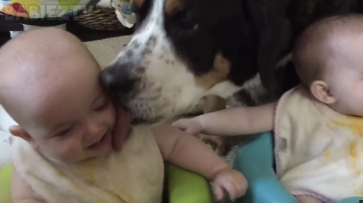 Adorable Video of Kids and Pets Living Life to the Fullest | I Love Being Christian Videos