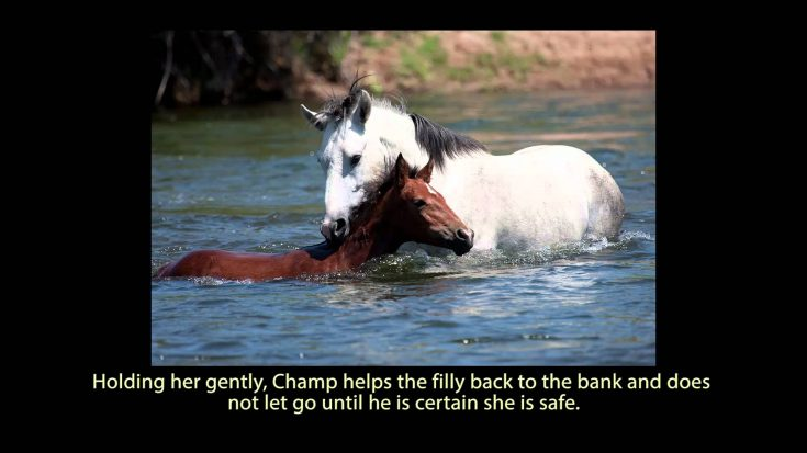 Wild Stallion Shows Genuine Love of Christ as He Saves a Baby Horse from Drowning | ILoveBeingChristian Videos
